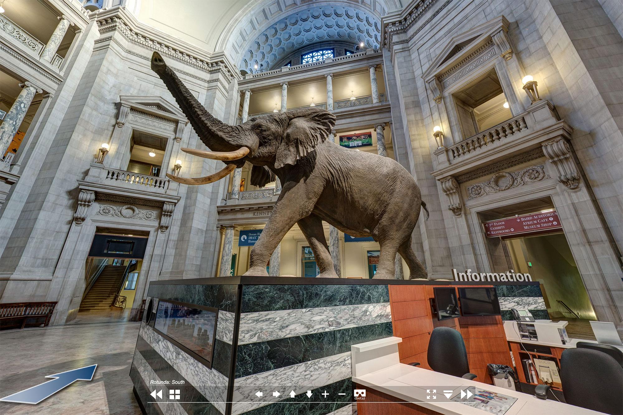 У входа в музей посетителей встречает огромное чучело слона