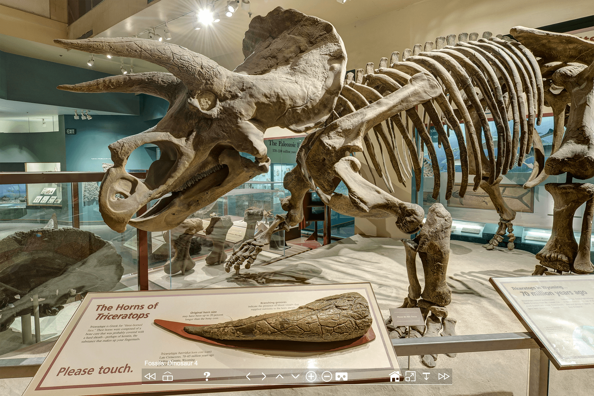 Зал динозавров, в котором есть скелет трицератопса