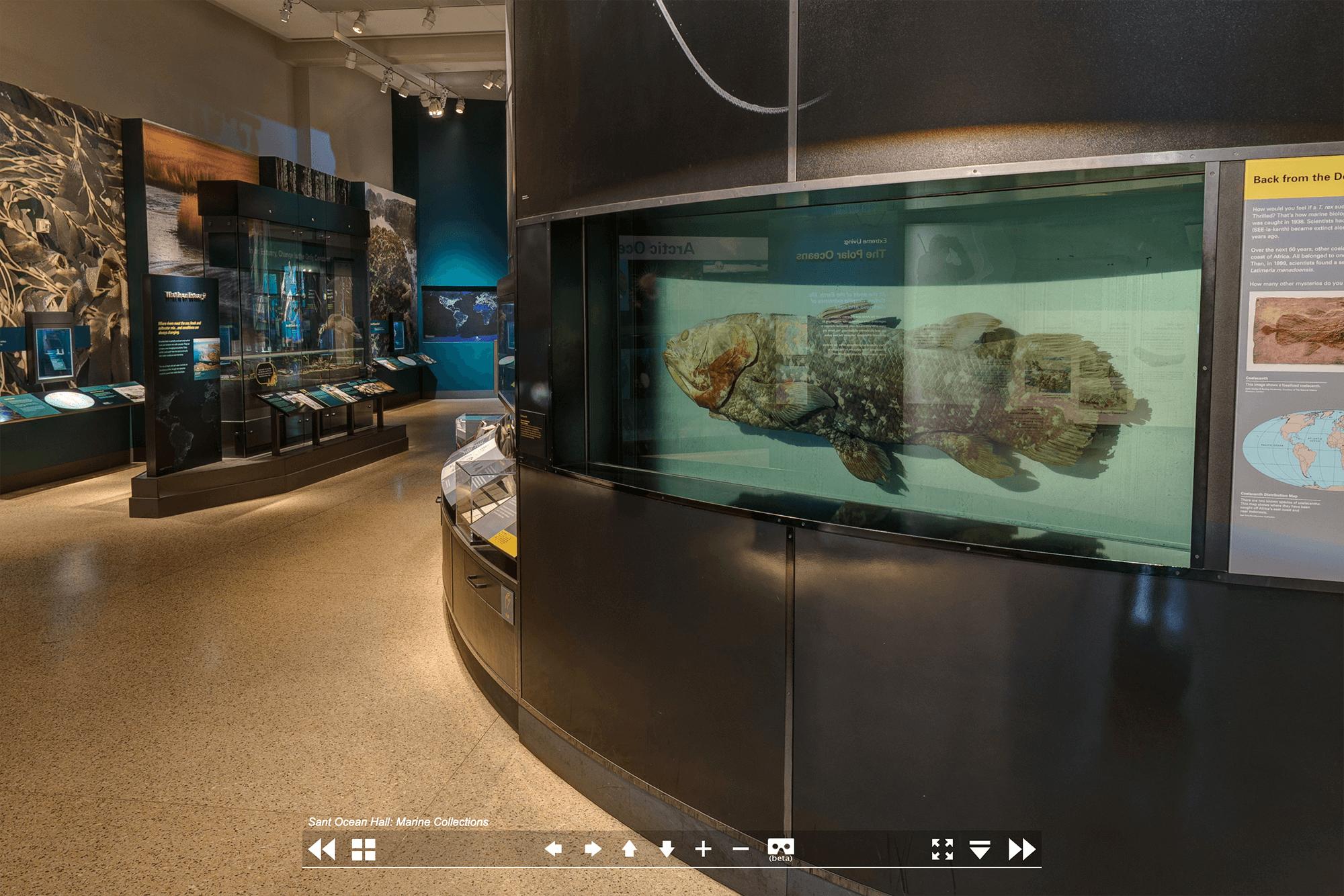 Рыба латимерия, которая жила до динозавров