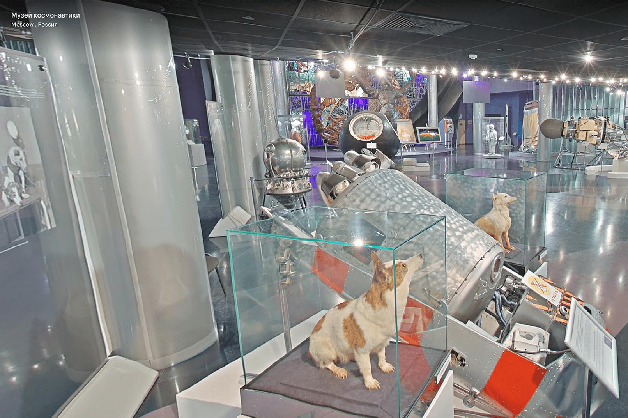 Белка и Стрелка не самые первые собаки в космосе, просто самые знаменитые