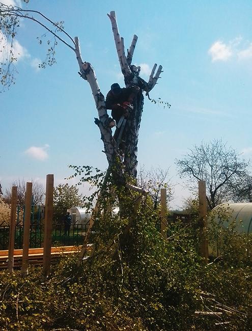 Если деревья мешают передавать сигнал от станции к радиоточке, их приходится спиливать