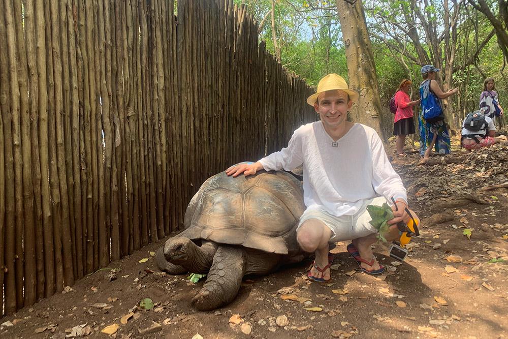 Столетние сейшельские черепахи по размеру как поросята