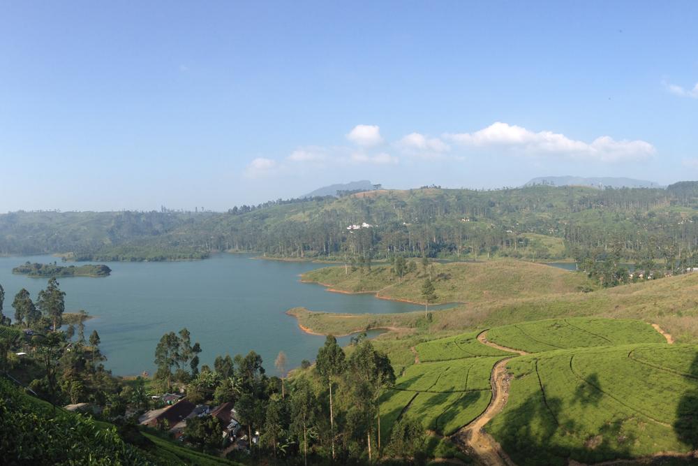 Вид на чайные плантации по дороге к пику Адама. Ради них стоило петлять по серпантину